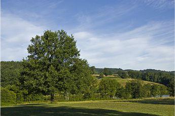 Camping Les Roulottes et Cabanes du Livradois - Auvergne