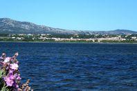 Domaine de la Palme, La Palme