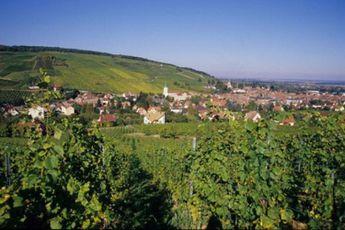 Camping du Staedly - Alsace - 5