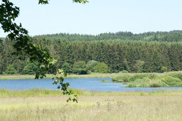 Camping Jungferweiher - Lac à proximité