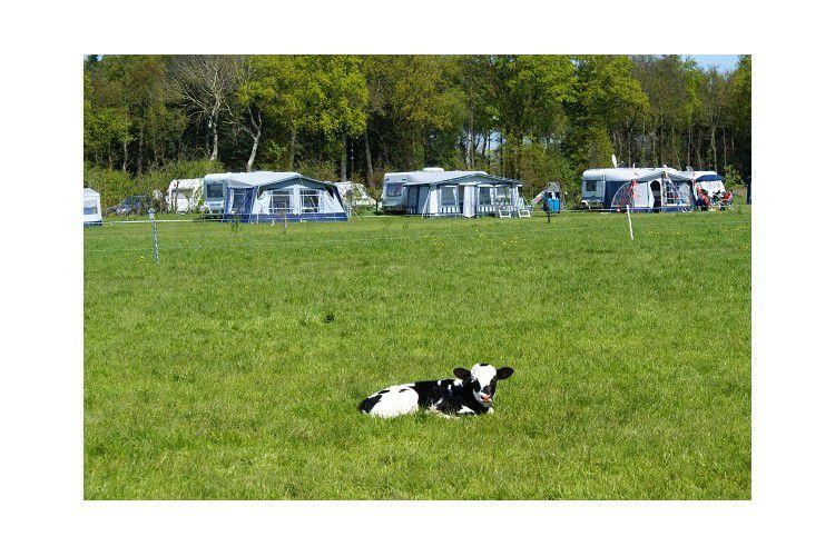 Camping Nieuwhof - Vue du camping