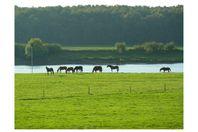 Boerderijcamping De Ulend, Kessel
