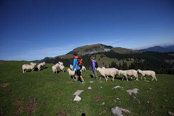 Camping Campeggio Garda - Lombardie