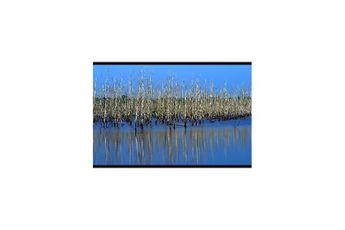 Marais d'Orx - classé réserve naturelle