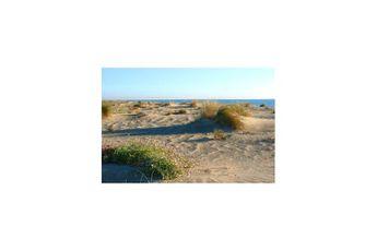 Dunes du Bocal du Tech - Argelès sur Mer