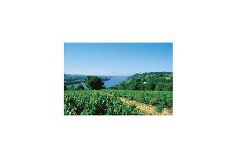 Vignoble nantais et la Loire