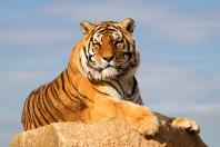 Campeggio Zoo de la Palmyre